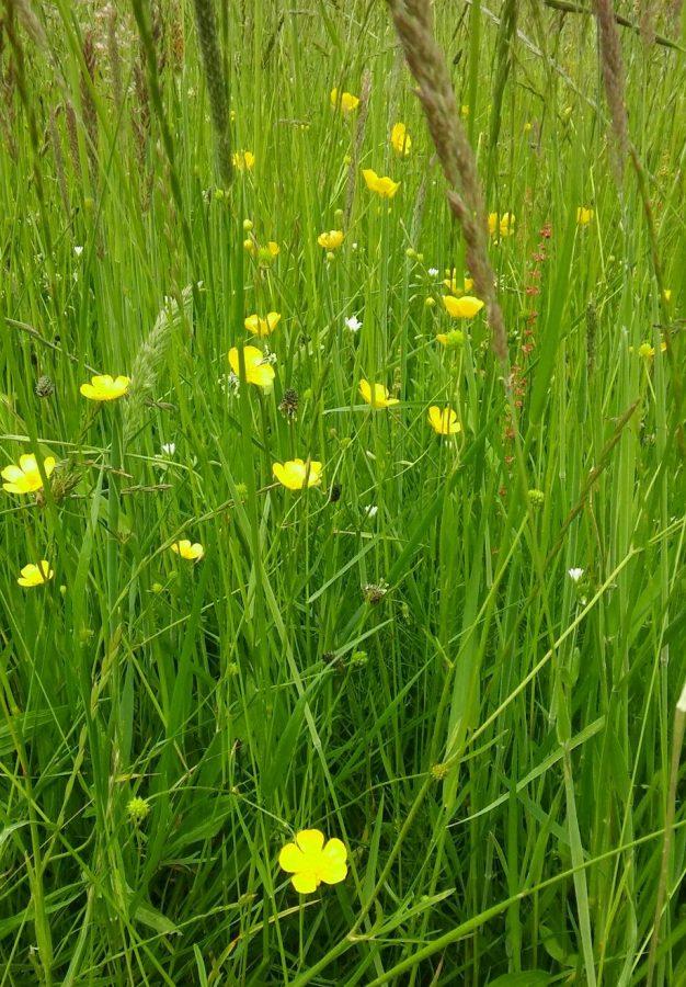 Małyńska łąka